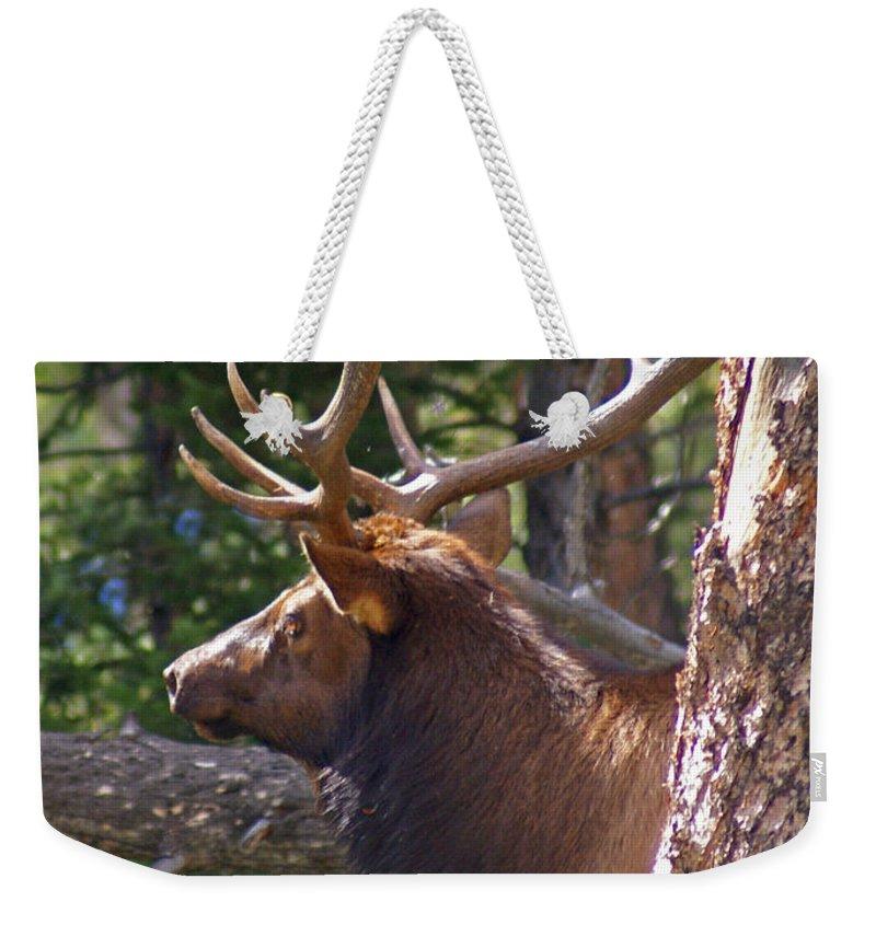 Elk Weekender Tote Bag featuring the photograph Bull Elk 2 by Heather Coen