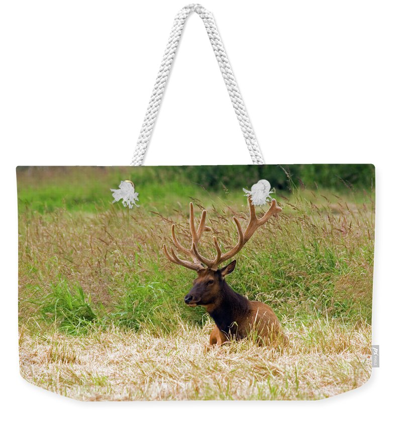 Bull Elk Weekender Tote Bag featuring the photograph Bull Elk At Rest by Randall Ingalls