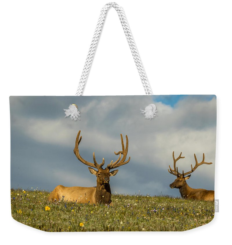 Cervus Canadensis Weekender Tote Bag featuring the photograph Bull Elk Friends For Now by Vicki Stansbury