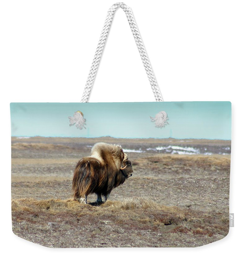 Bull Weekender Tote Bag featuring the photograph Bull Musk Ox by Anthony Jones