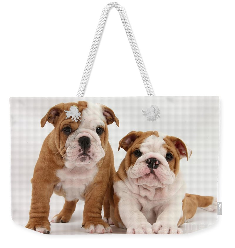 Animal Weekender Tote Bag featuring the photograph Bulldog Puppies by Mark Taylor
