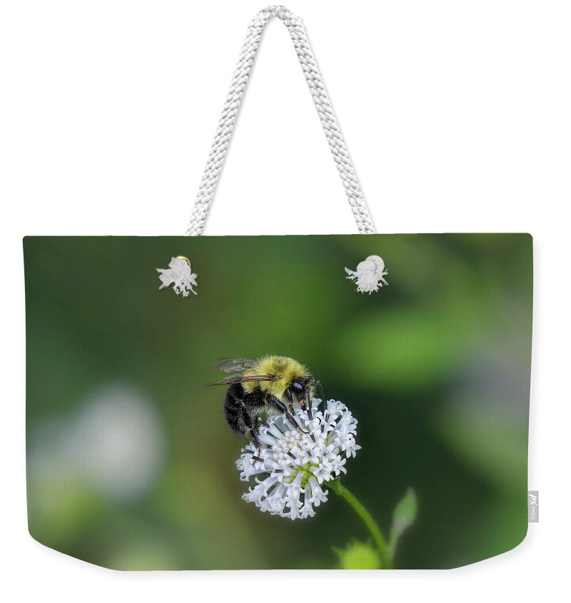 Bee Weekender Tote Bag featuring the photograph Bumble Bee On White Wild Flower On Banks Of Tennessee River At Shiloh National Military Park by WildBird Photographs