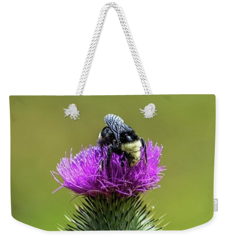Bumblebee Weekender Tote Bag featuring the photograph Bumblebee On Thistle by Eric Strickland