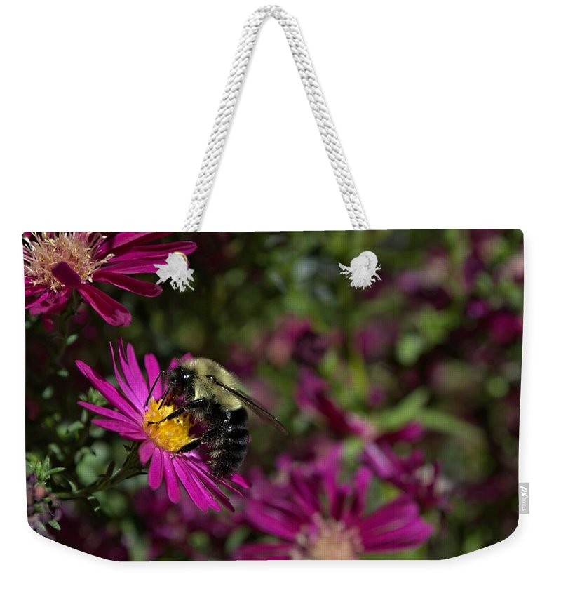 Bumble Bees Weekender Tote Bag featuring the photograph Bumbles In The Fall by Valerie Cartier