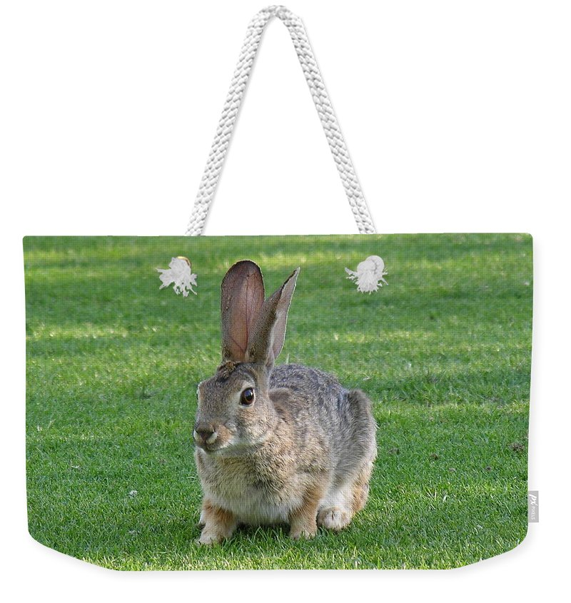 Bunny Weekender Tote Bag featuring the photograph Bunny by Diane Greco-Lesser