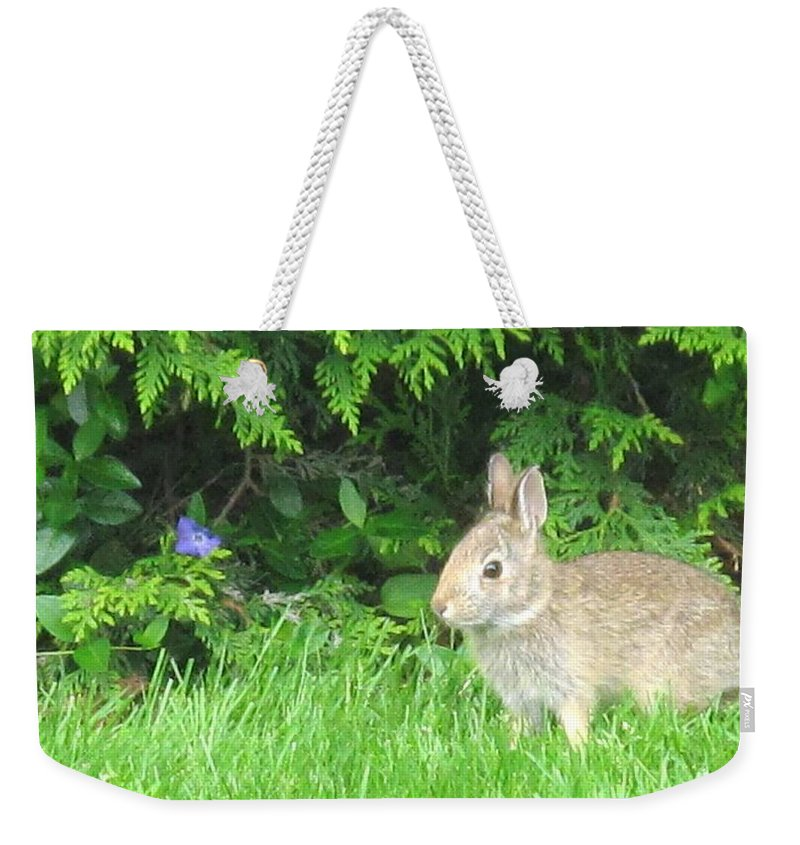 Rabbit Weekender Tote Bag featuring the photograph Bunny In Repose by Ian MacDonald
