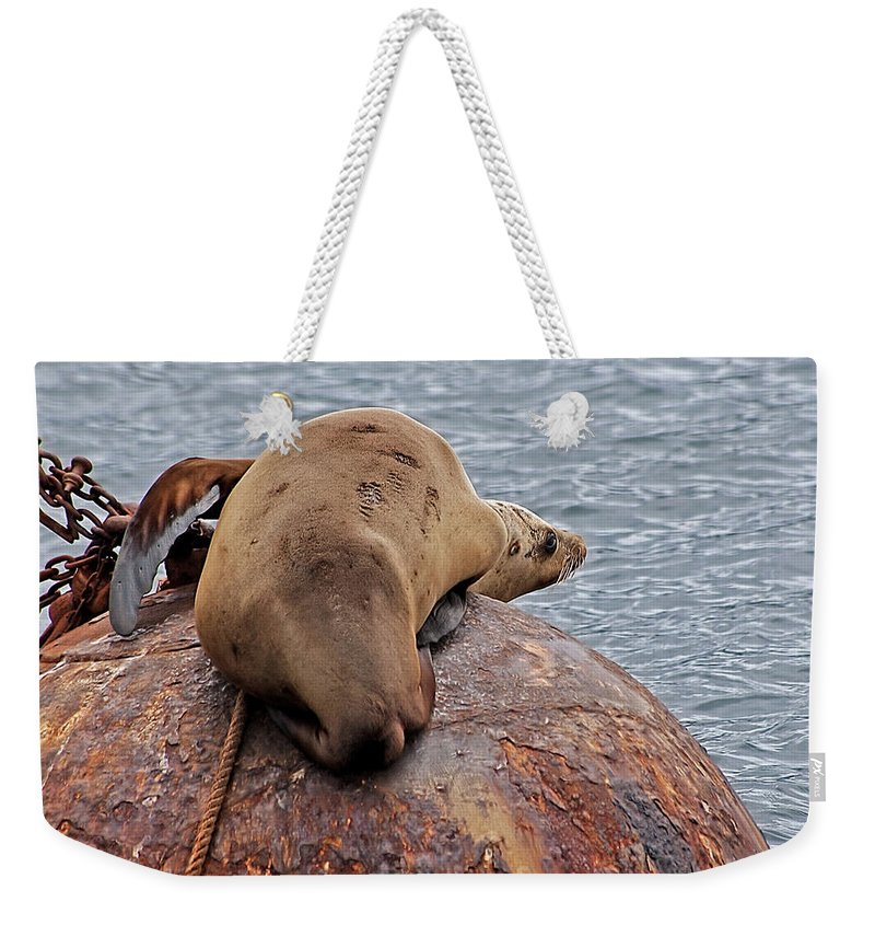 Sea Lion Weekender Tote Bag featuring the photograph Buoy Break by Jay Billings