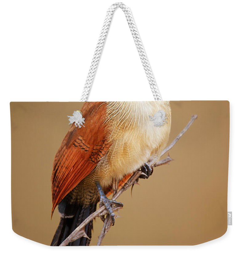Bird Weekender Tote Bag featuring the photograph Burchell's Coucal - Rainbird by Johan Swanepoel