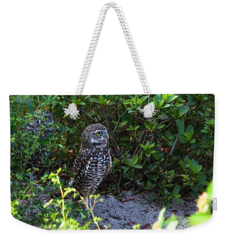 Athene Cunicularia Weekender Tote Bag featuring the photograph Burrowing Owls At Guard by Ed Gleichman