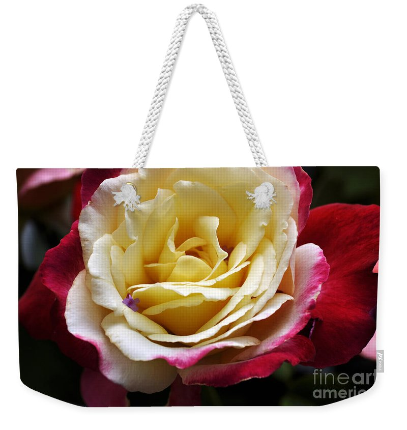 Clay Weekender Tote Bag featuring the photograph Burst Of Rose by Clayton Bruster