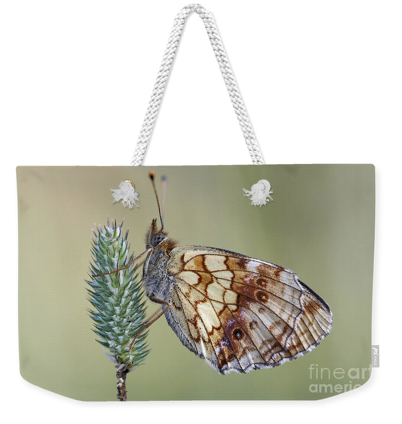 Macro Weekender Tote Bag featuring the photograph Butterfly - Meadow Satyrid by Michal Boubin