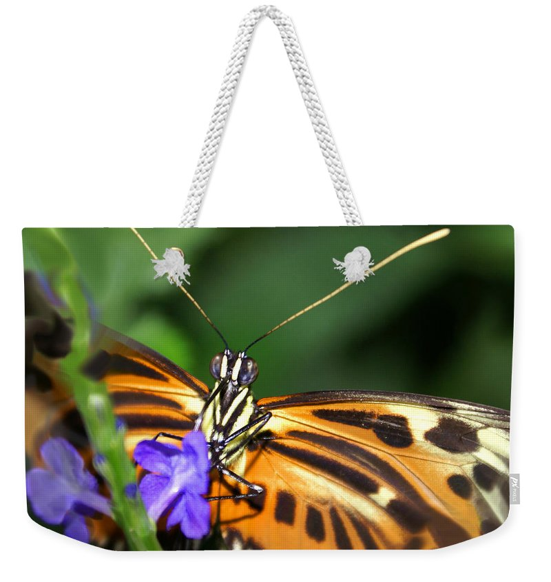 Butterfly Weekender Tote Bag featuring the photograph Butterfly 2 Eucides Isabella by Heather Coen