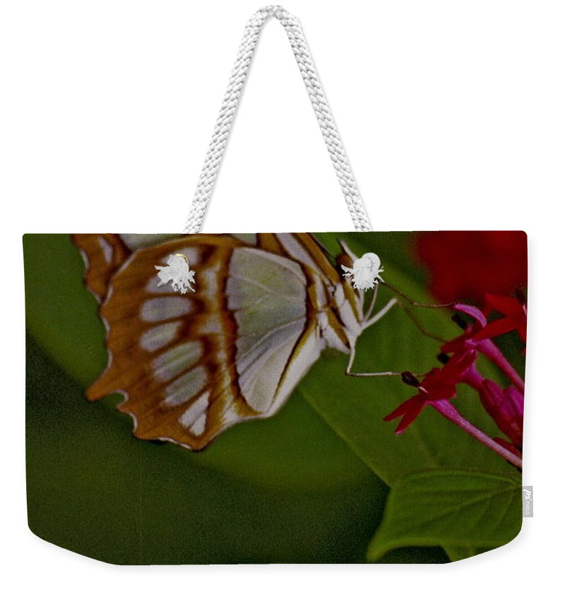 Butterfly Weekender Tote Bag featuring the photograph Butterfly 4 by Michael Peychich