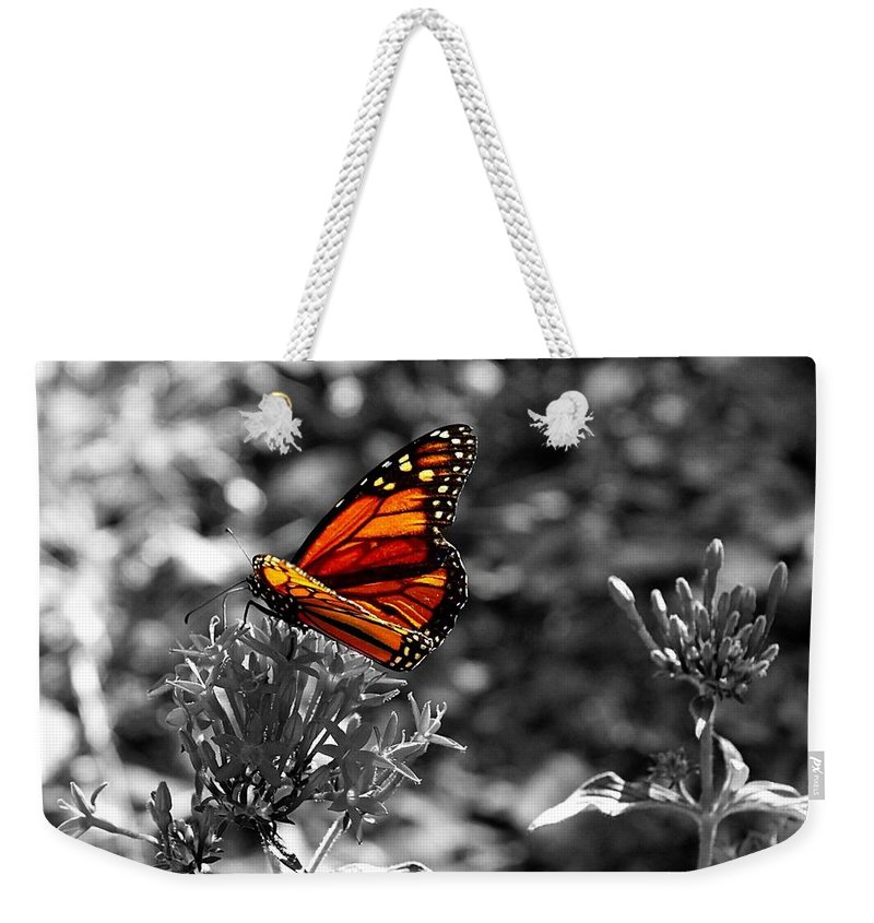 Butterfly Weekender Tote Bag featuring the photograph Butterfly Color On Black And White by Paul Wilford