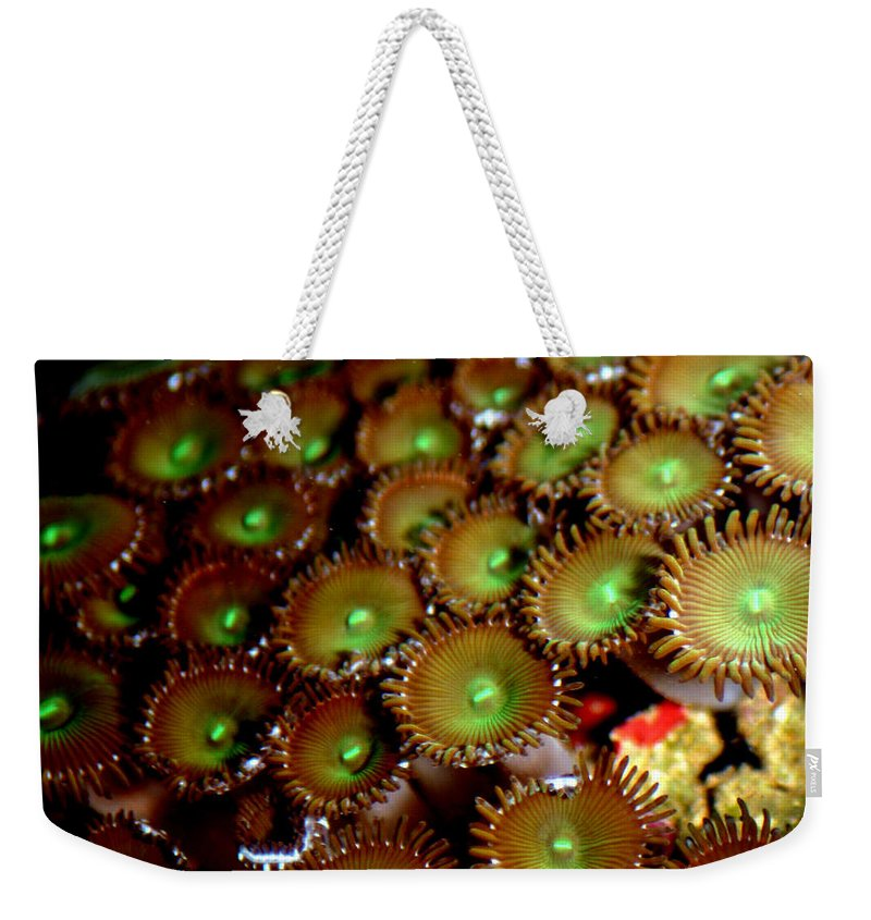 Underwater Weekender Tote Bag featuring the photograph Button Polyps by Anthony Jones