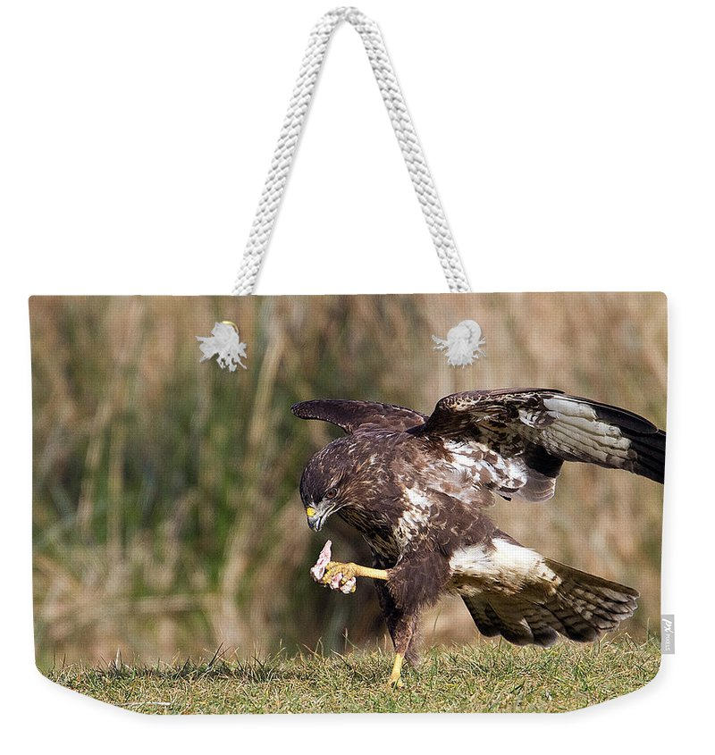 Buzzard Weekender Tote Bag featuring the photograph Buzzard Feeding by Bob Kemp