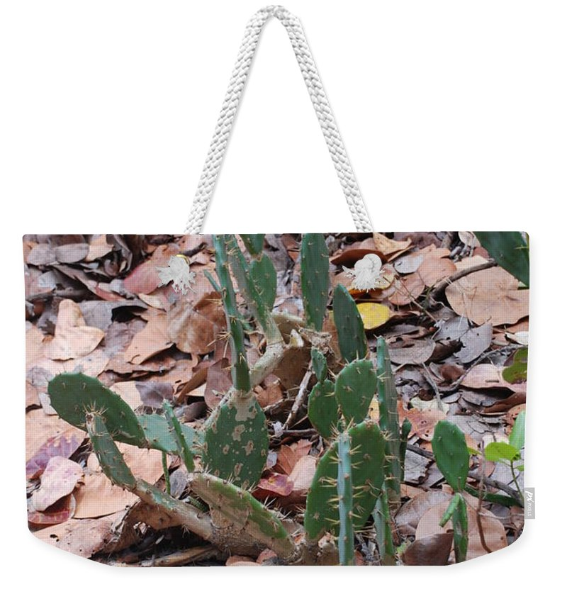 Cacti Weekender Tote Bag featuring the photograph Cacti And Leaves by Rob Hans