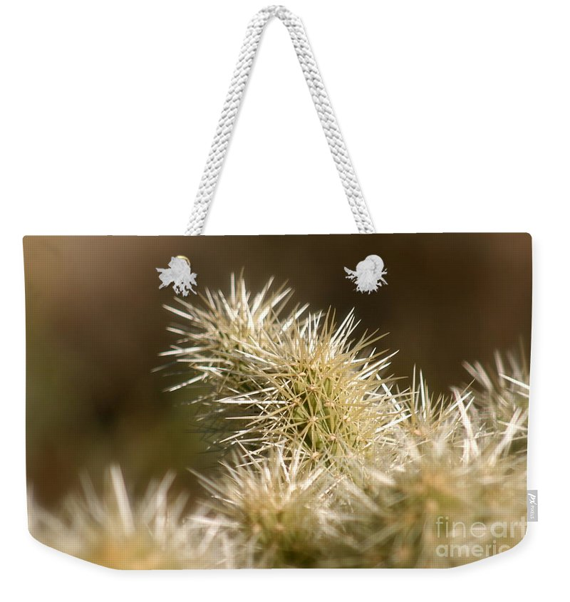 Cactus Weekender Tote Bag featuring the photograph Cacti by Nadine Rippelmeyer