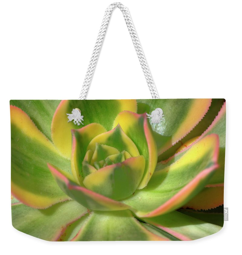 Cactus Weekender Tote Bag featuring the photograph Cactus 4 by Jim And Emily Bush