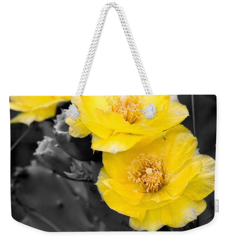 Cactus Weekender Tote Bag featuring the photograph Cactus Blossom by Christopher Holmes