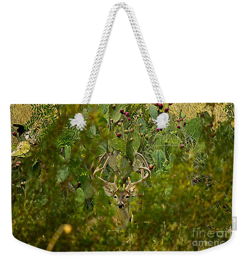 Michael Tidwell Photography Weekender Tote Bag featuring the photograph Cactus Buck by Michael Tidwell