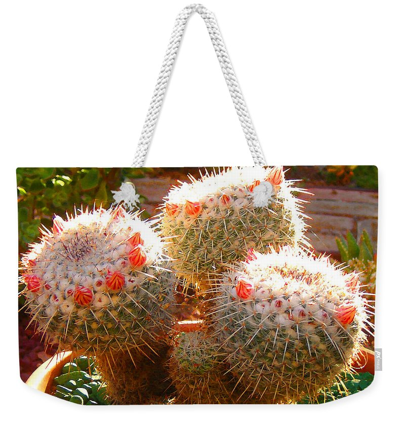 Landscape Weekender Tote Bag featuring the photograph Cactus Buds by Amy Vangsgard