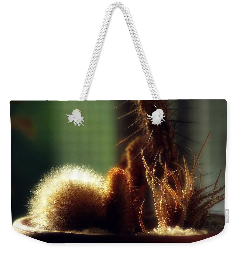 2d Weekender Tote Bag featuring the photograph Cactus Light by Brian Wallace
