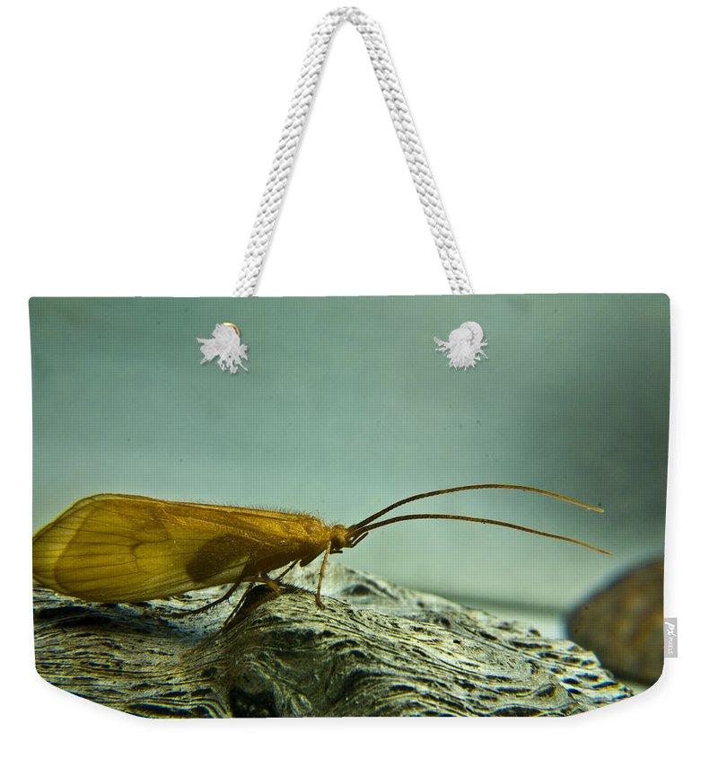 Caddisfly Weekender Tote Bag featuring the photograph Caddisfly by Douglas Barnett