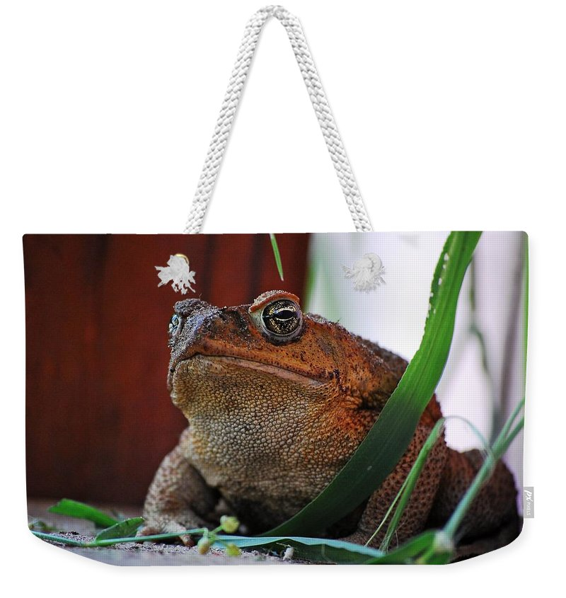 Cain Toad Weekender Tote Bag featuring the photograph Cain Toad by Robert Meanor