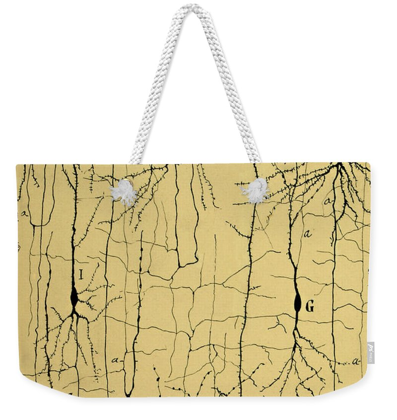 Science Weekender Tote Bag featuring the photograph Cajal Drawing of Microscopic Structure of the Brain 1904 by Science Source