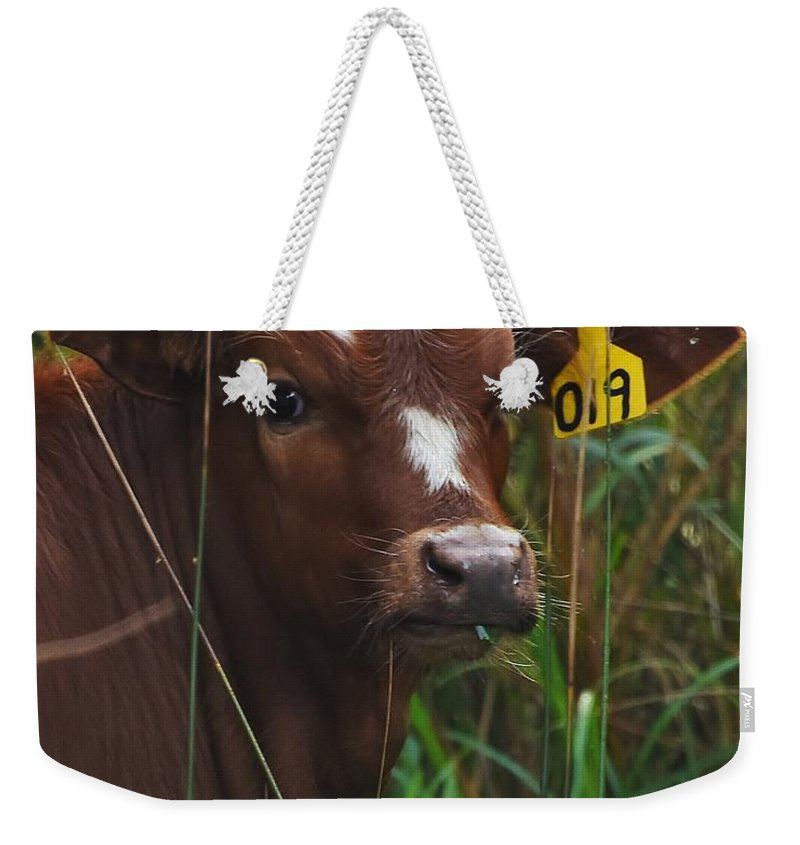 Golden Cow Weekender Tote Bag featuring the photograph Calf Nineteen by Lisa Renee Ludlum