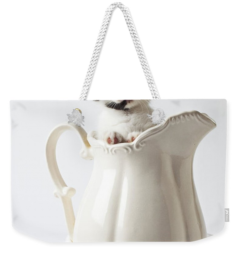 Calico Kitten White Pitcher Weekender Tote Bag featuring the photograph Calico Kitten In White Pitcher by Garry Gay