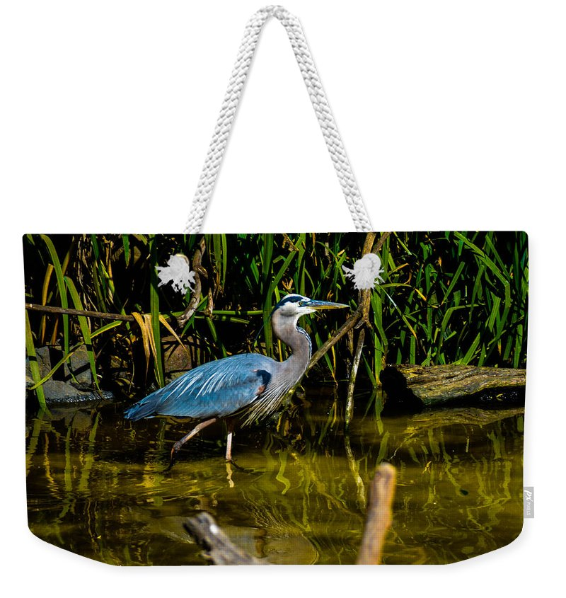 California Weekender Tote Bag featuring the photograph California Grey Heron by Tommy Anderson