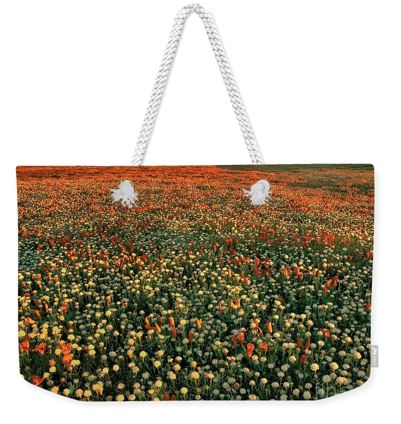 California Poppies Weekender Tote Bag featuring the photograph California Poppies At Dawn Lancaster California by Dave Welling
