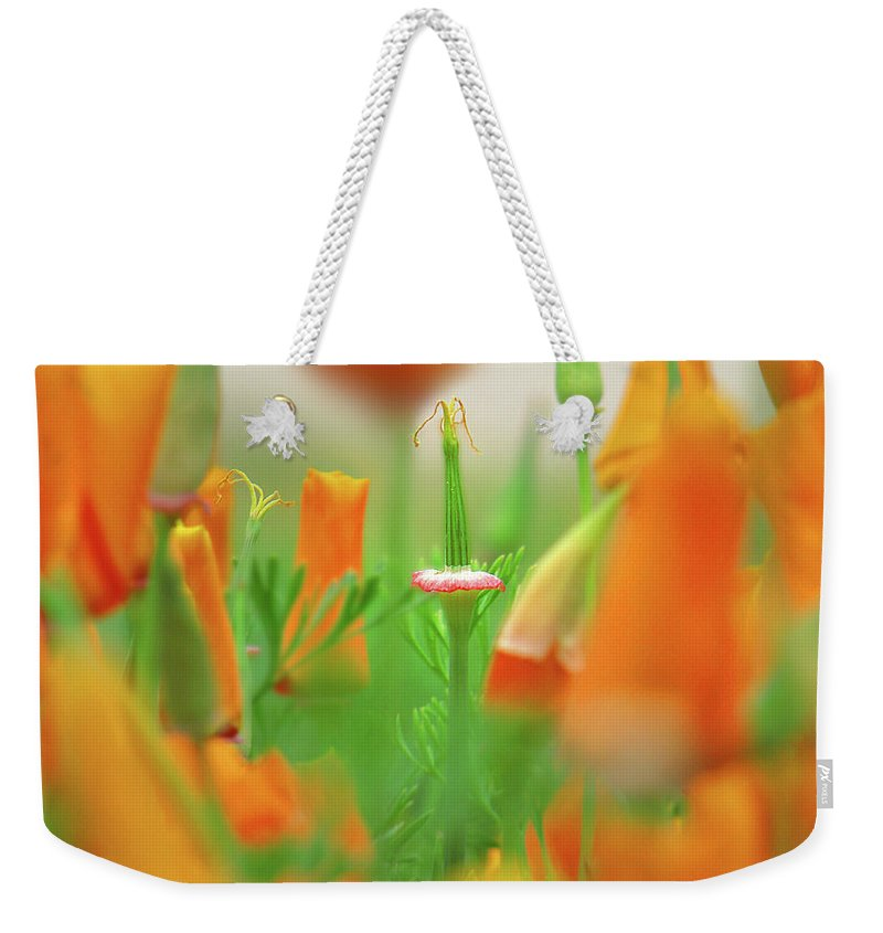 California Poppies Weekender Tote Bag featuring the mixed media California Poppies by Aubri Johneen