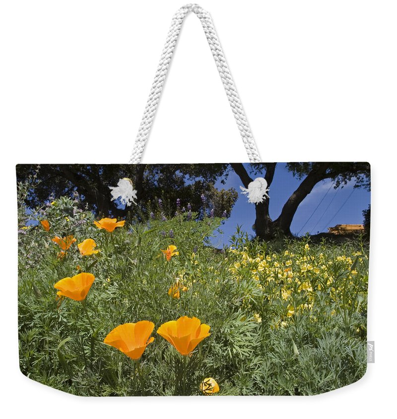 Nobody Weekender Tote Bag featuring the photograph California Poppy Eschscholtzia by Rich Reid