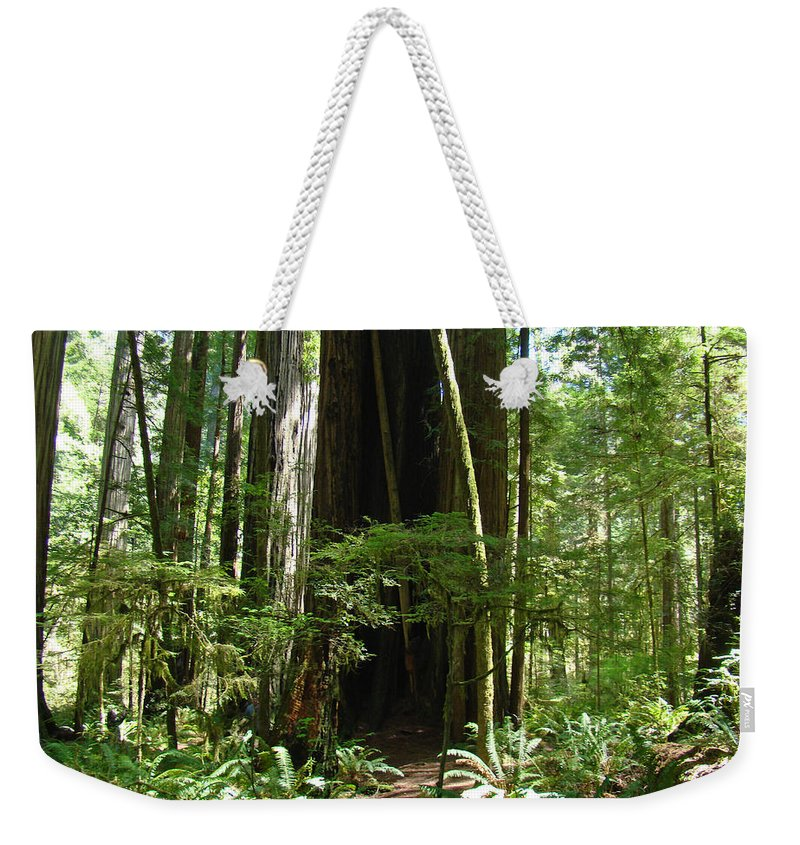 Redwood Weekender Tote Bag featuring the photograph California Redwood Trees Forest Art by Baslee Troutman