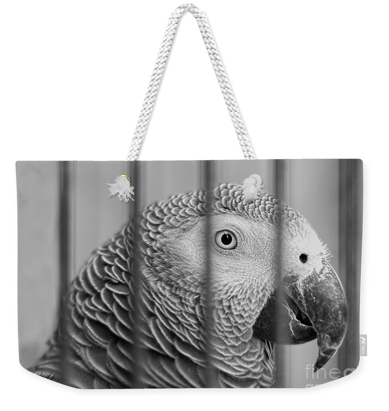 Parrot Weekender Tote Bag featuring the photograph Call My Lawyer by Barbara McMahon