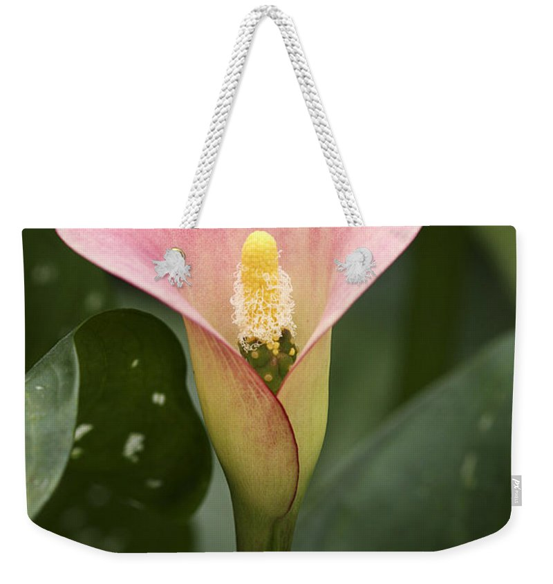 Flower Weekender Tote Bag featuring the photograph Calla In The Mist by Deborah Benoit