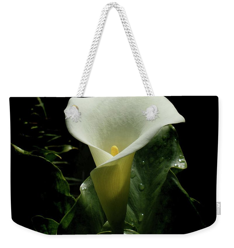 Calla Lily Weekender Tote Bag featuring the photograph Calla Lily by Ernie Echols