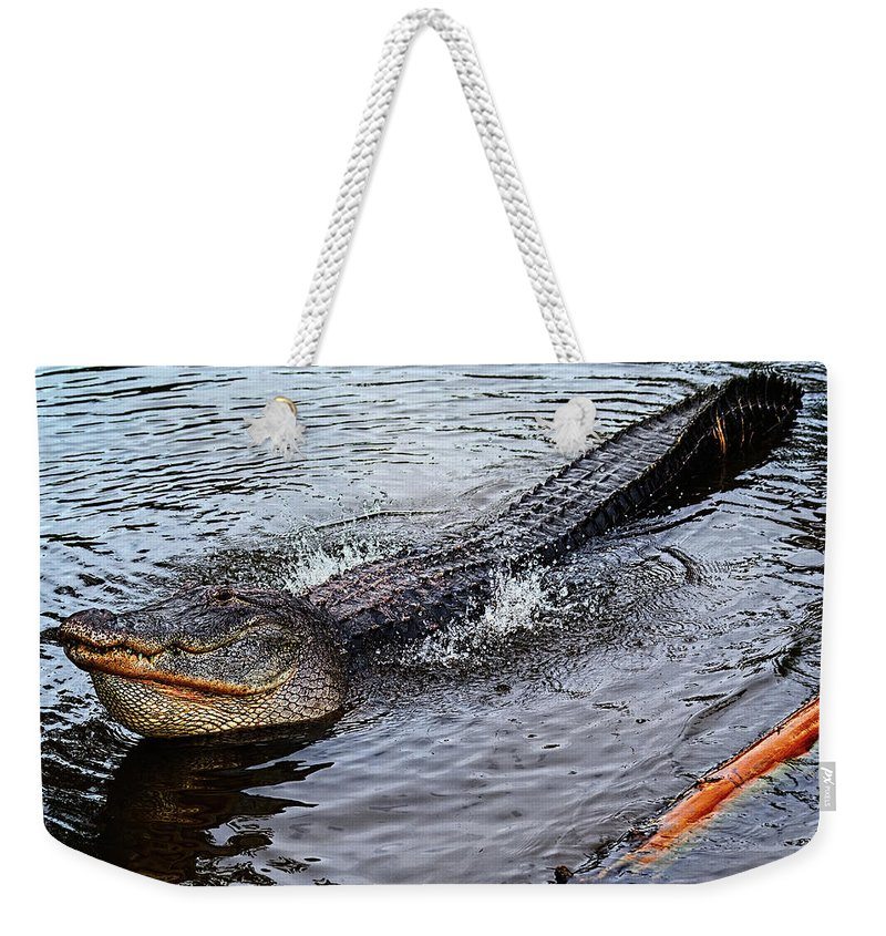 Alligator Weekender Tote Bag featuring the photograph Calling For A Date by Christopher Holmes