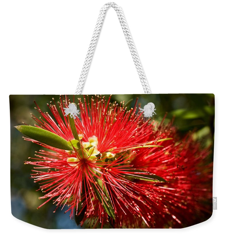 Callistemon Weekender Tote Bag featuring the photograph Callistemon by Steven Sparks