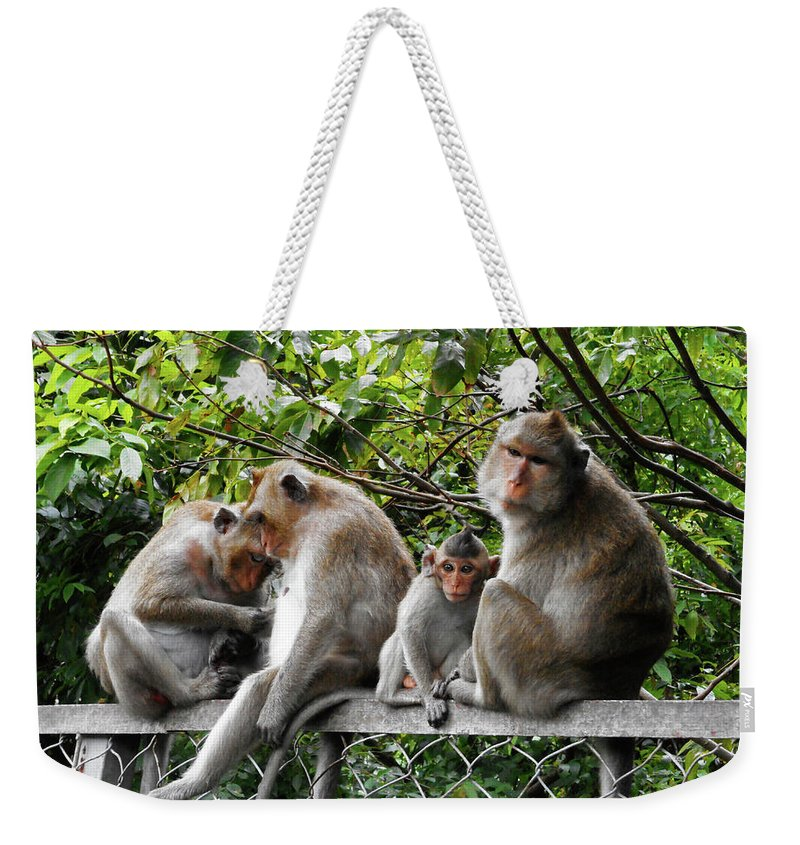 Cambodia Weekender Tote Bag featuring the photograph Cambodia Monkeys 5 by Ron Kandt