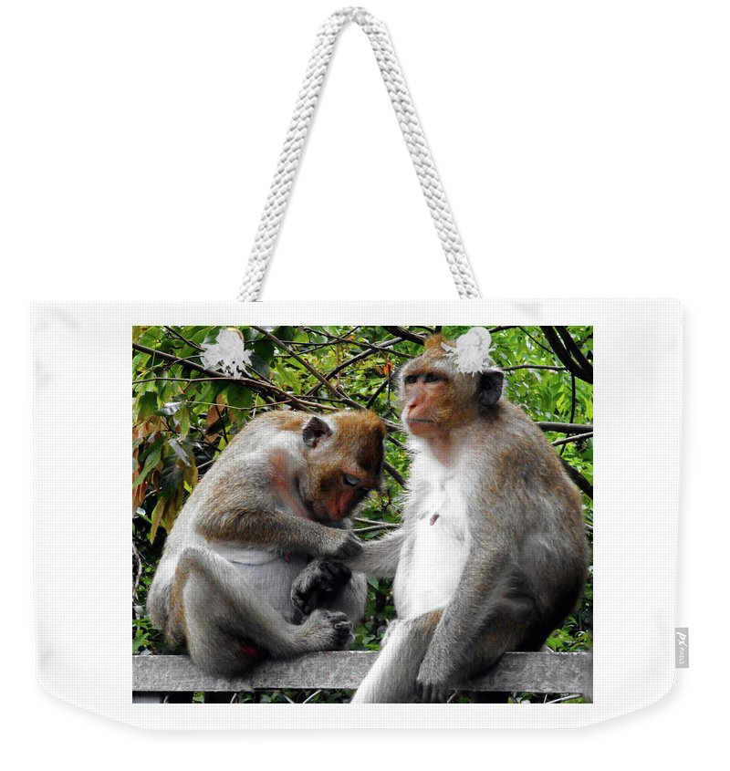 Cambodia Weekender Tote Bag featuring the photograph Cambodia Monkeys 6 by Ron Kandt