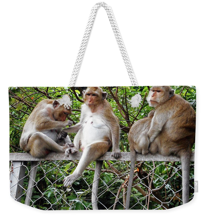 Cambodia Weekender Tote Bag featuring the photograph Cambodia Monkeys 7 by Ron Kandt
