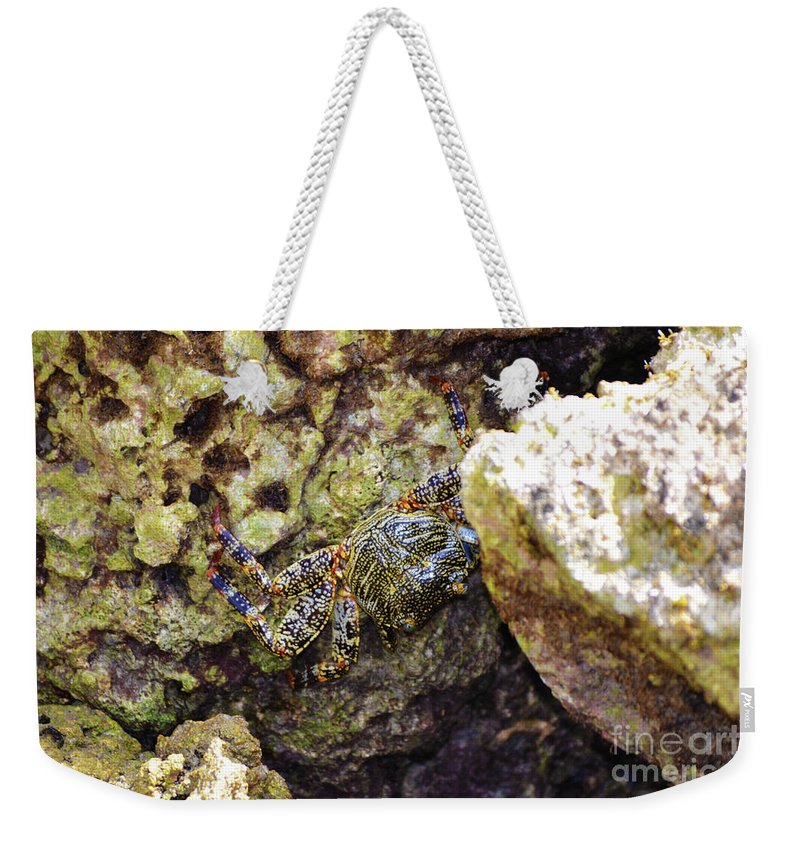 Florida Weekender Tote Bag featuring the photograph Camouflaged Crab by Kylee S