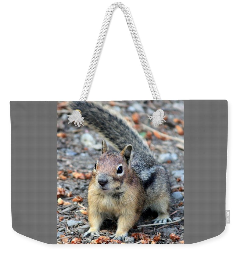 Chipmunk Weekender Tote Bag featuring the photograph Campground Chipmunk by Carol Groenen