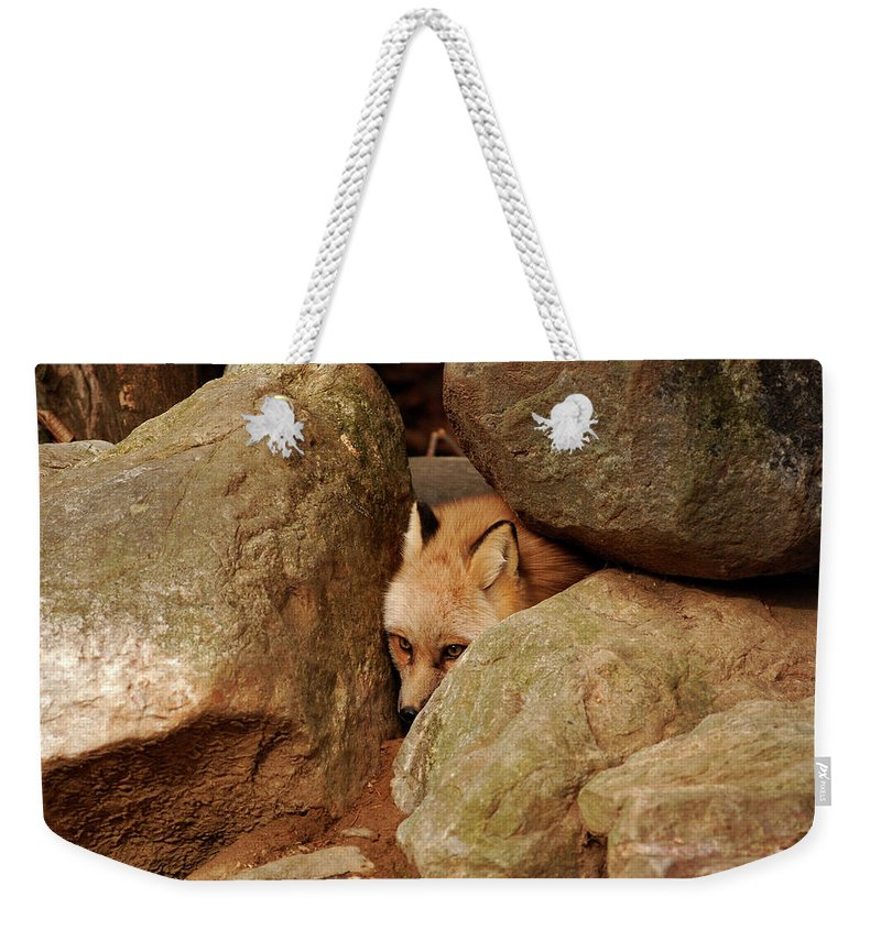 Fox Weekender Tote Bag featuring the photograph Can I Come Out Yet by Lori Tambakis