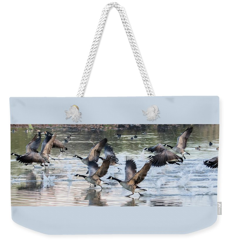 Canada Weekender Tote Bag featuring the photograph Canada Geese 1390-011618-1 by Tam Ryan