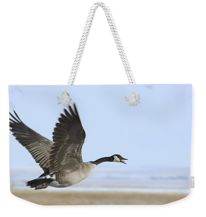 Goose Weekender Tote Bag featuring the photograph Canada Goose by Gary Beeler